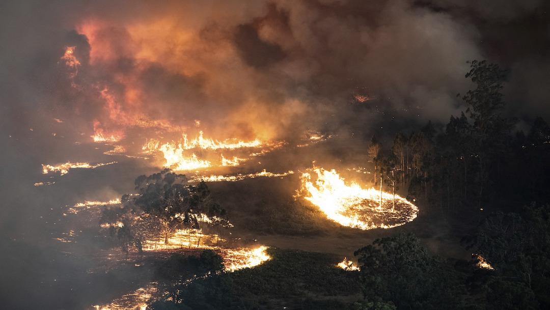 Incendio en Australia: Maneras en las que tú también puedes ayudar