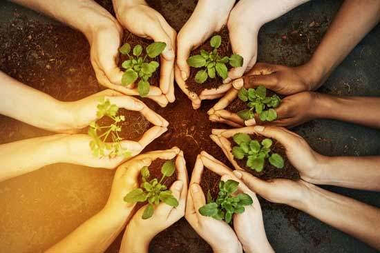 Hierbas y vegetales fáciles de cultivar en tu jardín