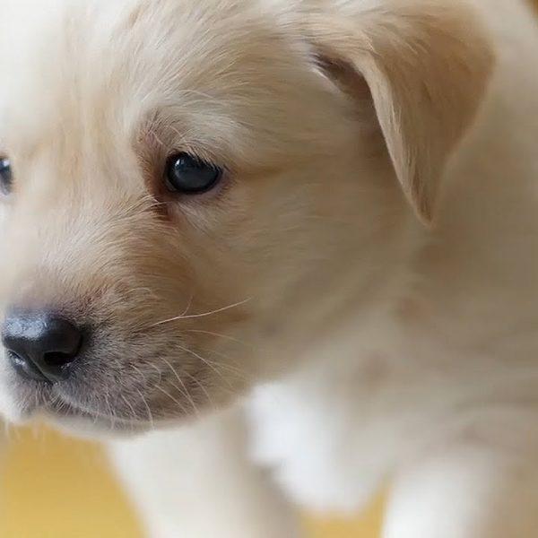 8 formas de cuidar a tu mascota durante COVID-19