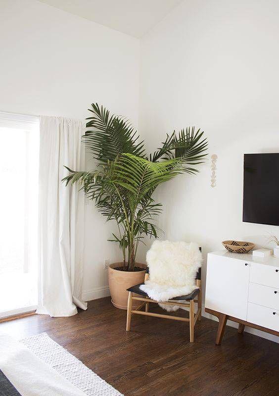 Las 10 mejores plantas para decorar interiores