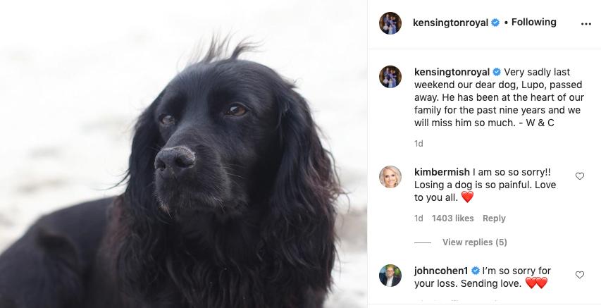 Falleció Lupo, el perro de el Príncipe William y Kate Middleton