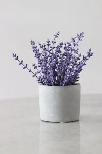 Plantas para tu hogar que te ayudan a disminuir el estrés