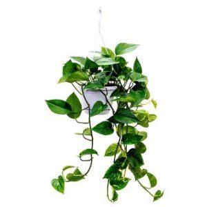 9 plantas colgantes fáciles de mantener para el interior de tu hogar