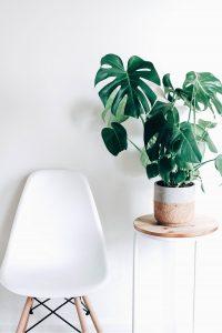 Decora tu área de trabajo con estas plantas