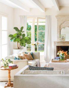 Plantas de interior que le dan vida a tu hogar